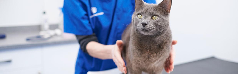 Shrewsbury – Cat Friendly Clinic