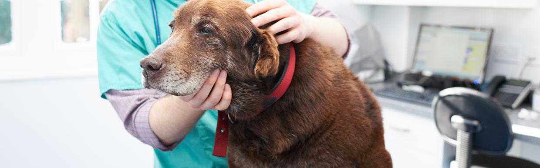 Pet bereavement support